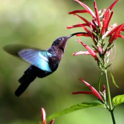 Google hummingbird uppdatering